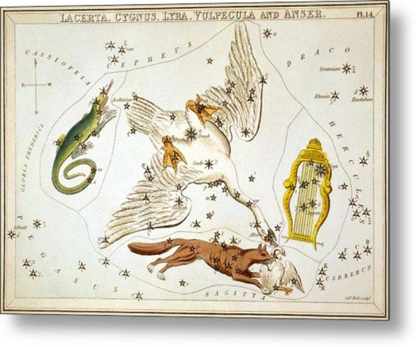 Lacerta Cygnus Lyra Vulpecula And Anser Metal Print