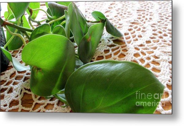 Lacy Plant Metal Print