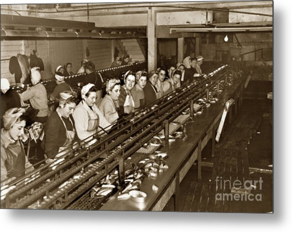 Ladies Packing Sardines In One Pound Oval Cans In One Of The Over 20 Cannery's Circa 1948 Metal Print