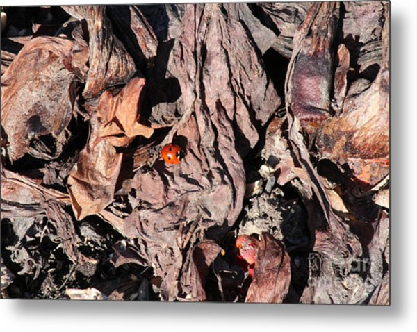 Lady Bug In Spring Metal Print