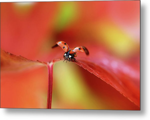 Ladybird In Autumn Metal Print