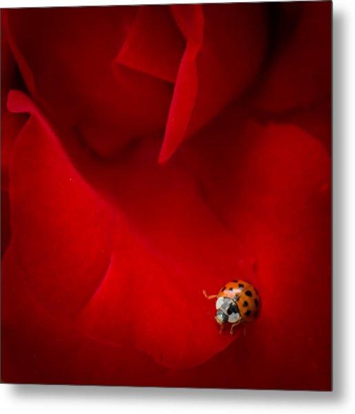 Ladybird In Rose Metal Print
