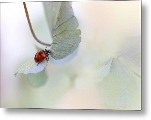 Ladybird On Blue-green Hydrangea Metal Print