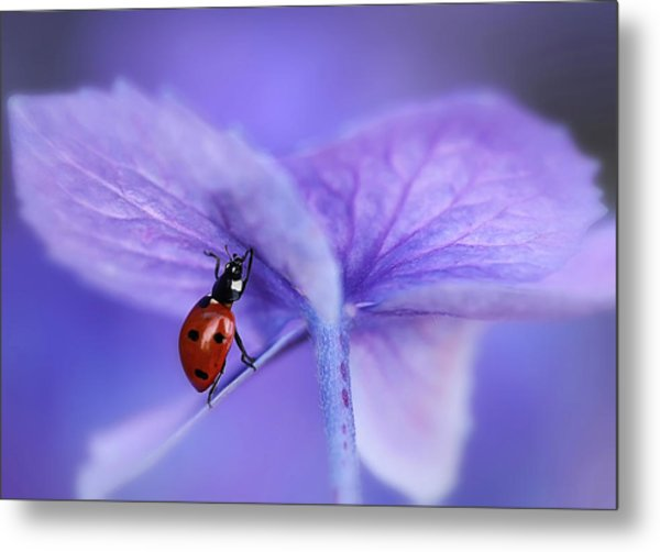 Ladybird On Purple Hydrangea Metal Print by Ellen Van Deelen