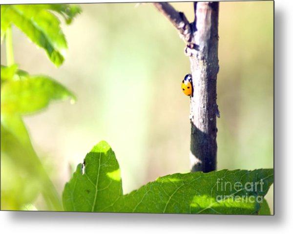 Ladybug 1.2777 Metal Print by Stephen Parker