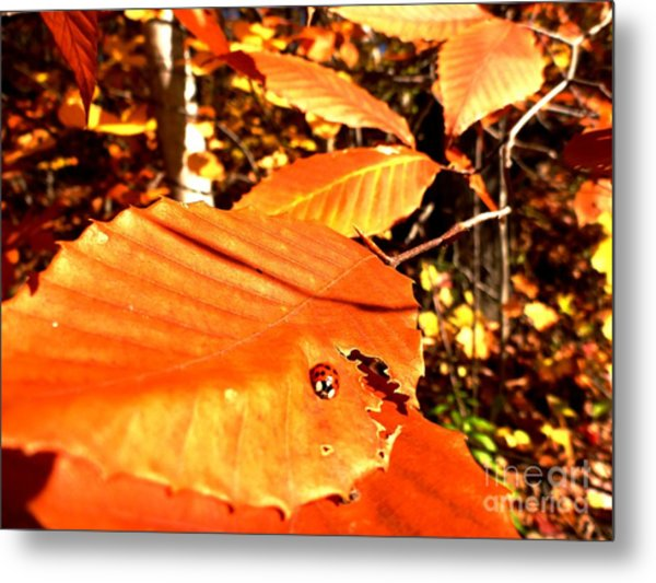 Metal Print featuring the photograph Ladybug At Fall by Cristina Stefan