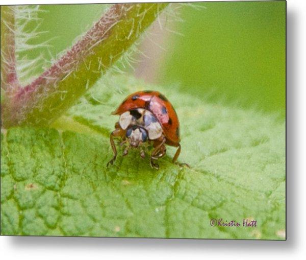Ladybug On Boneset Leaf Metal Print
