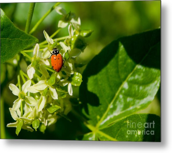 Ladybug On Flowers Metal Print