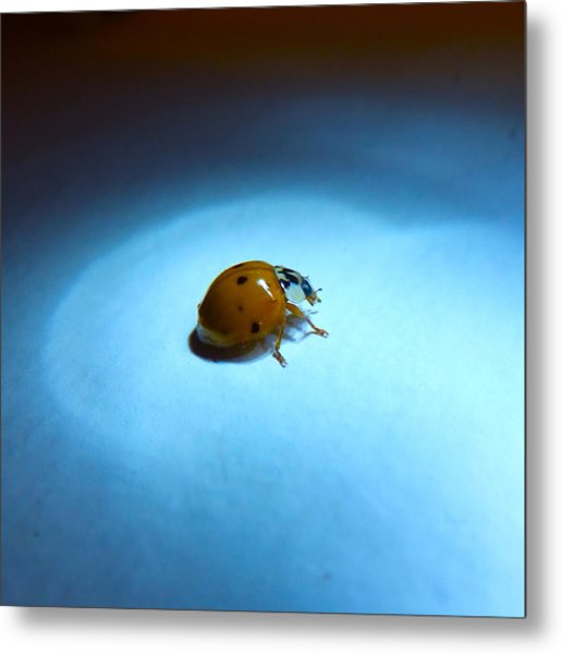 Ladybug Under Blue Light Metal Print