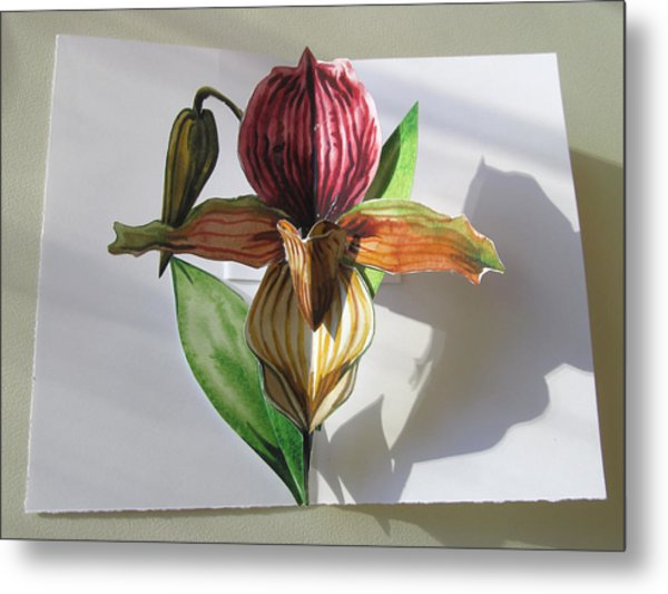 Ladyslipper Pop Up Card Metal Print