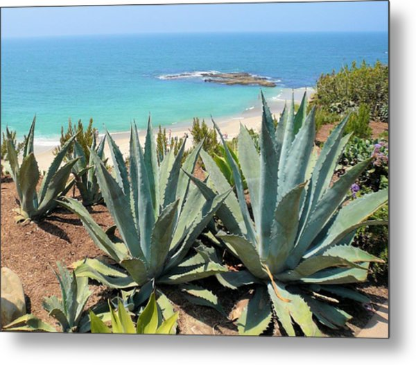 Laguna Coast With Cactus Metal Print
