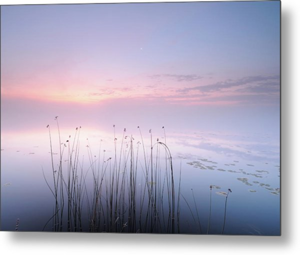 Lake Metal Print by