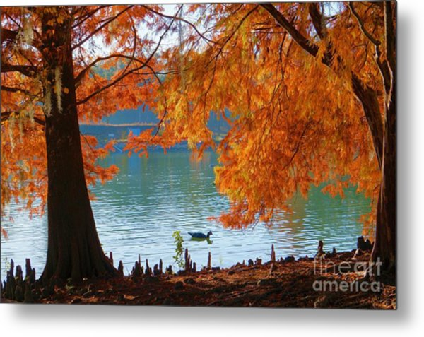 Lake Ella Morning Metal Print