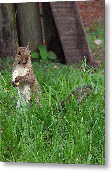 Lake Howard Squirrel 000 Metal Print by Chris Mercer