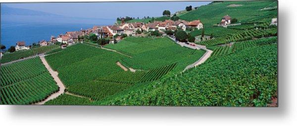 Lake Of Geneva, Vineyards, Rivaz Metal Print