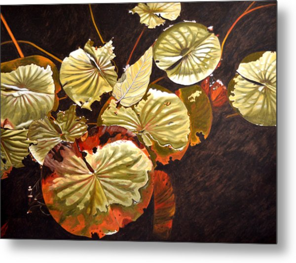 Lake Washington Lily Pad 11 Metal Print