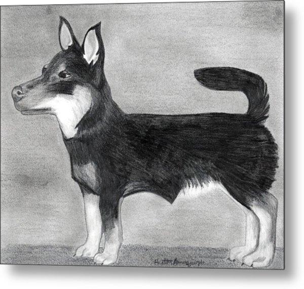 Lancashire Heeler Dog Portrait  Metal Print by Olde Time  Mercantile