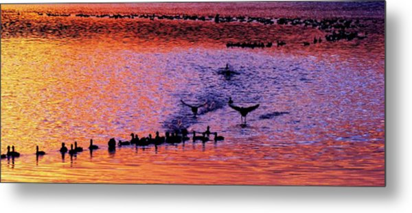 Landing Metal Print by Will Boutin Photos