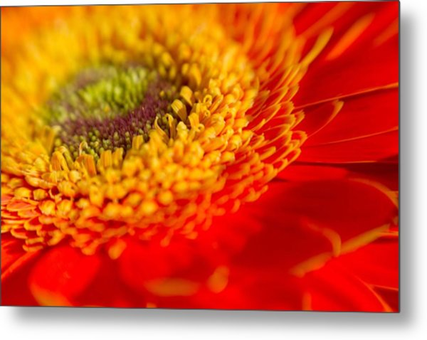 Landscape Of A Flower Metal Print