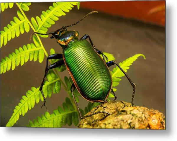 Large Green Beetle Metal Print