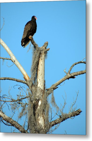Larry Buzzard Vulture Metal Print