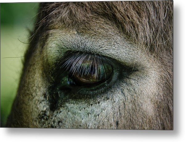 Lashes Metal Print