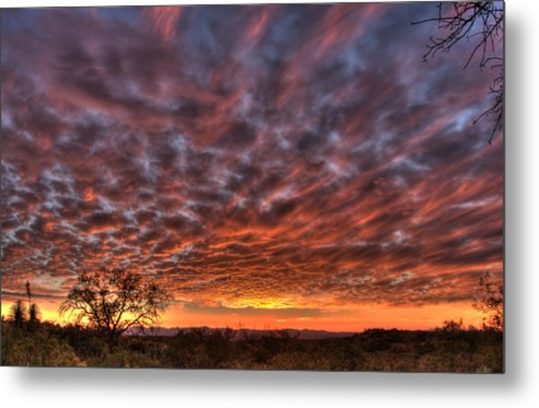 Last Light In Oracle Metal Print