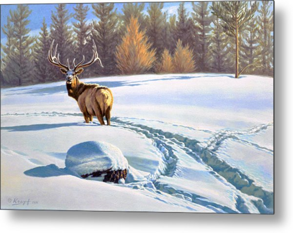 Last Look  -elk Metal Print