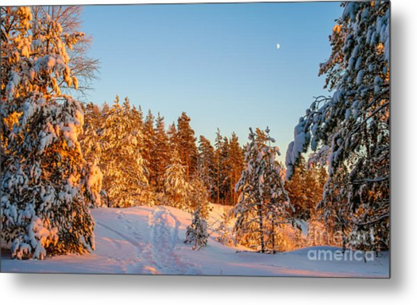 Last Rays Of Light In The Winter Forest Metal Print
