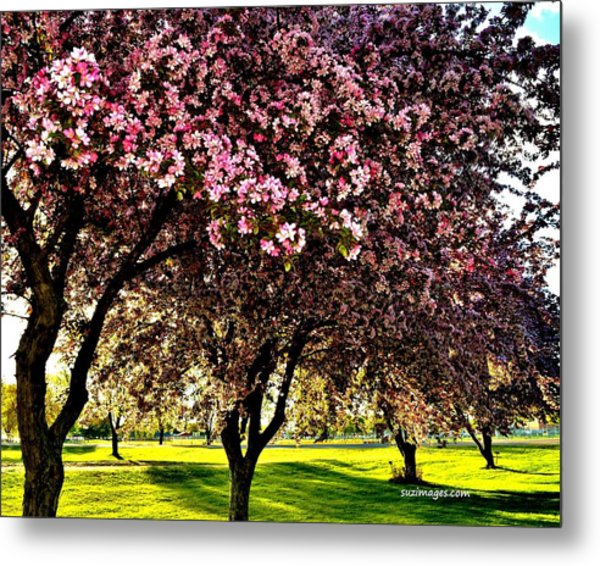 Late Afternoon At Lake Park Metal Print
