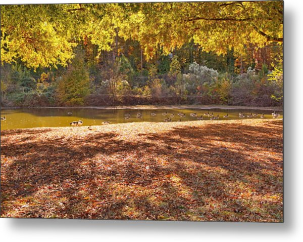 Late Afternoon Autumn Sunshine At The Lake Metal Print