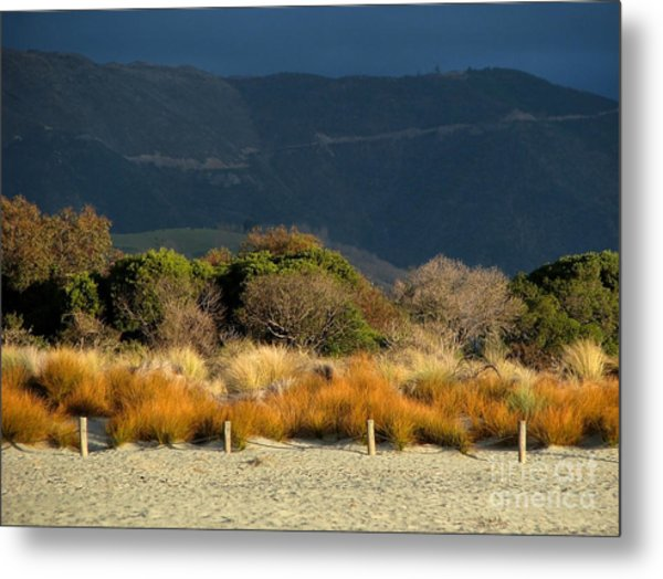 Late Afternoon Colours Metal Print