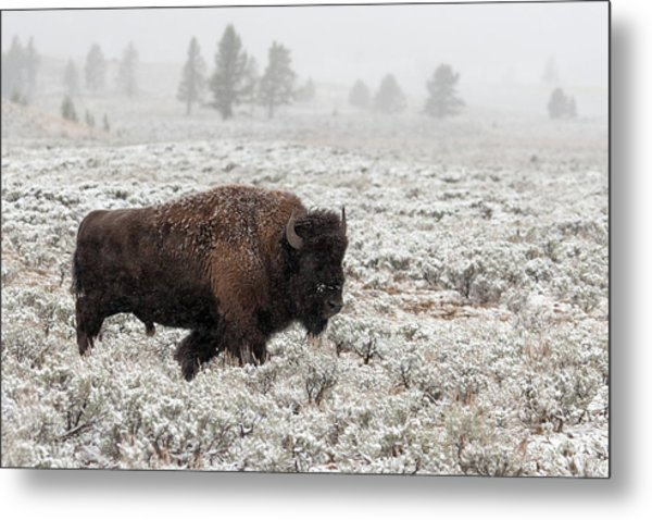 Late Fall Yellowstone Metal Print