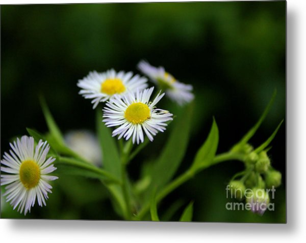 Late Summer Bloom Metal Print
