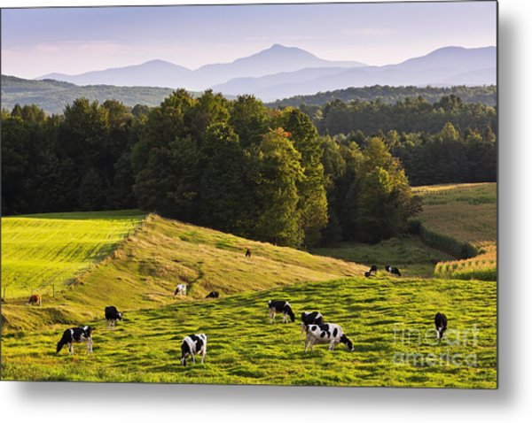 Late Summer Countryside Metal Print
