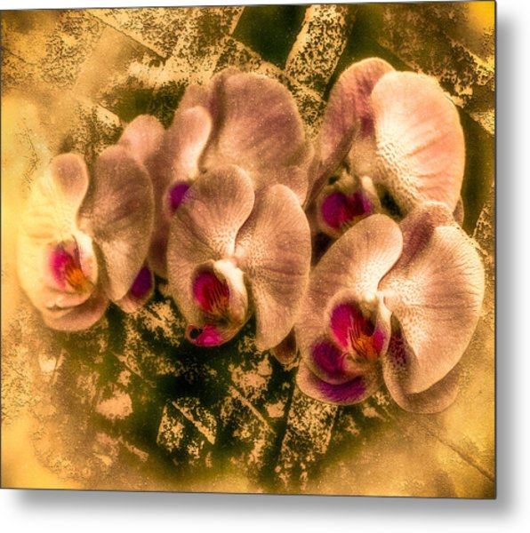 Late Summer Orchids Metal Print by Jill Balsam