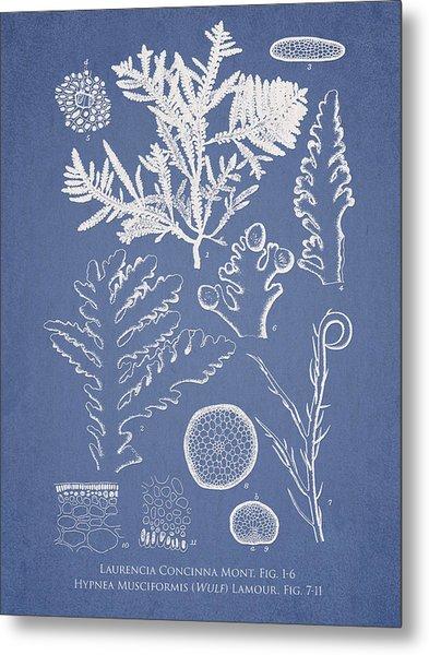 Laurencia Concinna And Hypnea Musciformis Metal Print