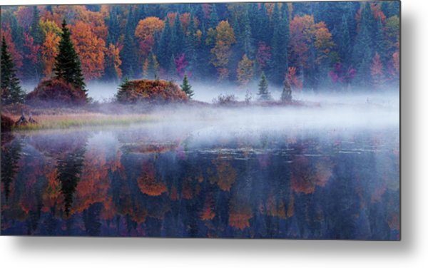 Laurentian Forest Metal Print by Mircea Costina