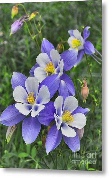 Metal Print featuring the digital art Lavender And White Star Flowers by Mae Wertz