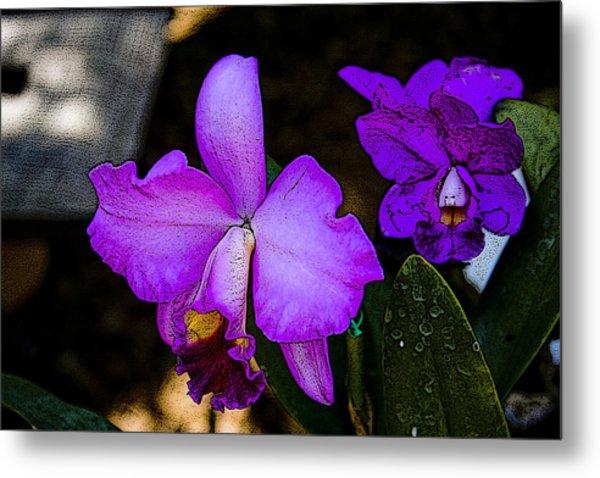 Lavender Catleya Orchid Metal Print