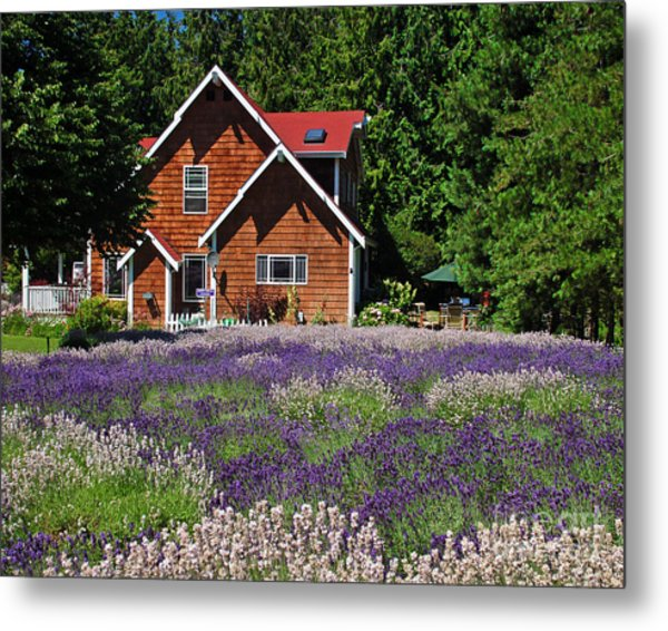 Lavender Cottage Metal Print