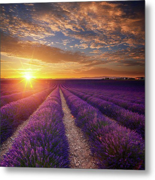 Lavender Field At Sunset Metal Print by Mammuth