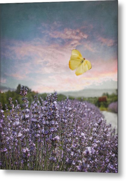 Lavender Field Pink And Blue Sunset And Yellow Butterfly Metal Print