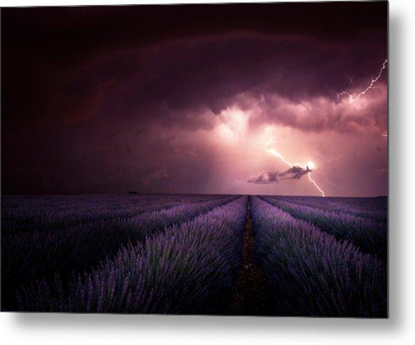 Lavender Fragrance Metal Print