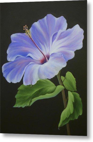 Lavender Hibiscus Metal Print by Francine Henderson