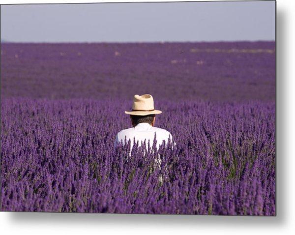 Lavender - Provence Metal Print