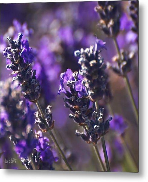 Lavender Stems Metal Print