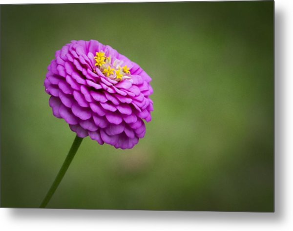 Layers Of Pink Metal Print by Christine Nunes