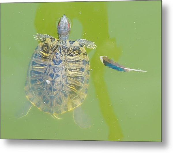 Lazy Summer Afternoon - Floating Turtle Metal Print
