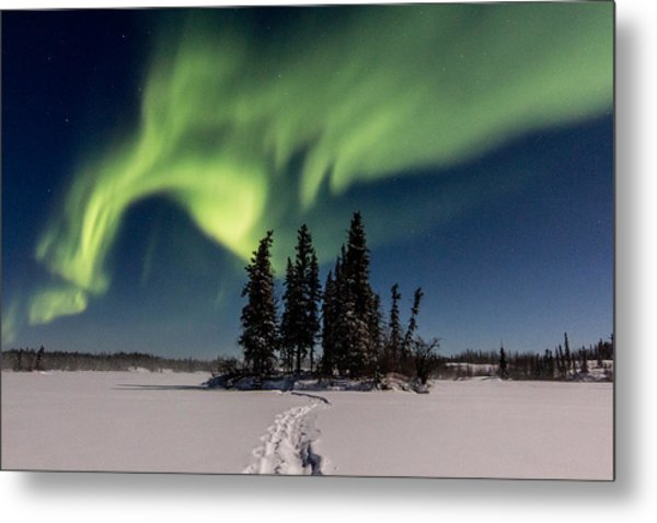 Leading The Way Metal Print by Valerie Pond